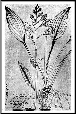 Finally A Family Name Hostaceae